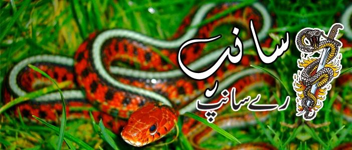 سانپ رے سانپ