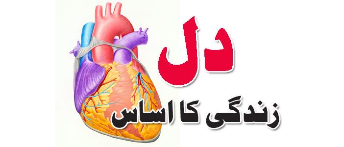دل، زندگی کا اساس