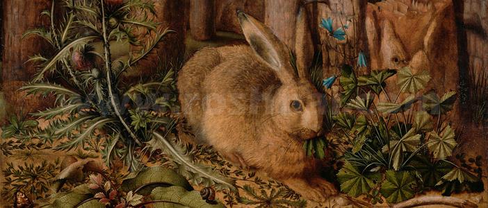 ناشکرا خرگوش